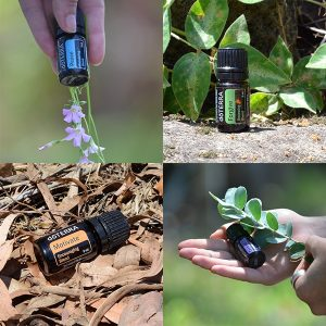 essential oils currumbin